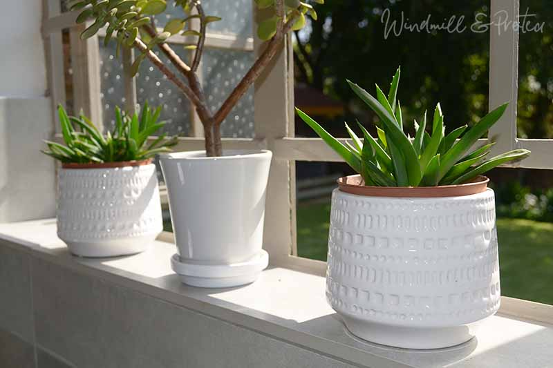 Bathroom Remodel Art and acc - White pots on windowsill | www.windmillprotea.com