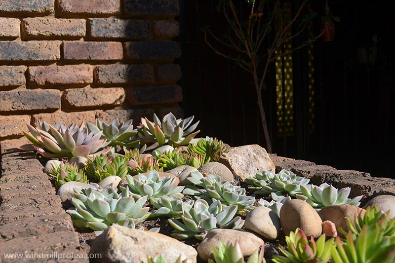 Succulent planter all done | www.windmillprotea.com