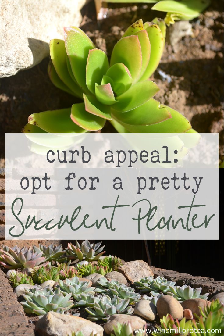 Curb appeal: opt for a pretty succulent planter