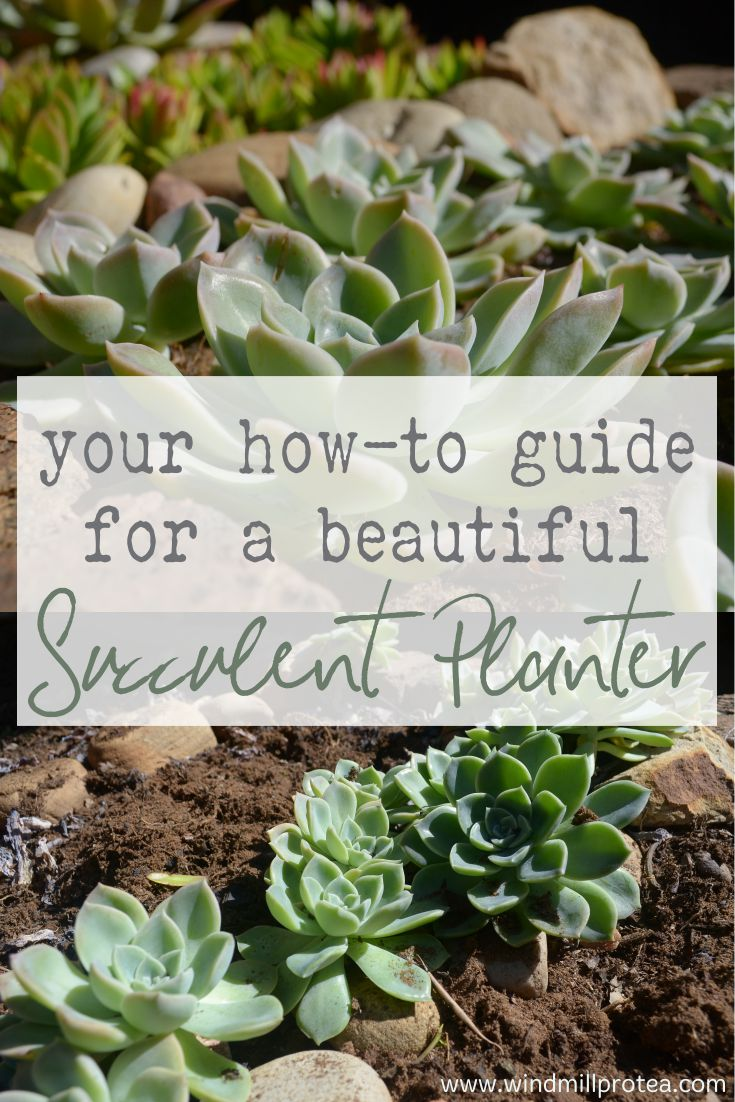 Your how-to guide for a beautiful succulent planter
