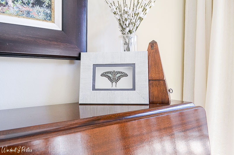 Butterfly Shadow Box | www.windmillprotea.com