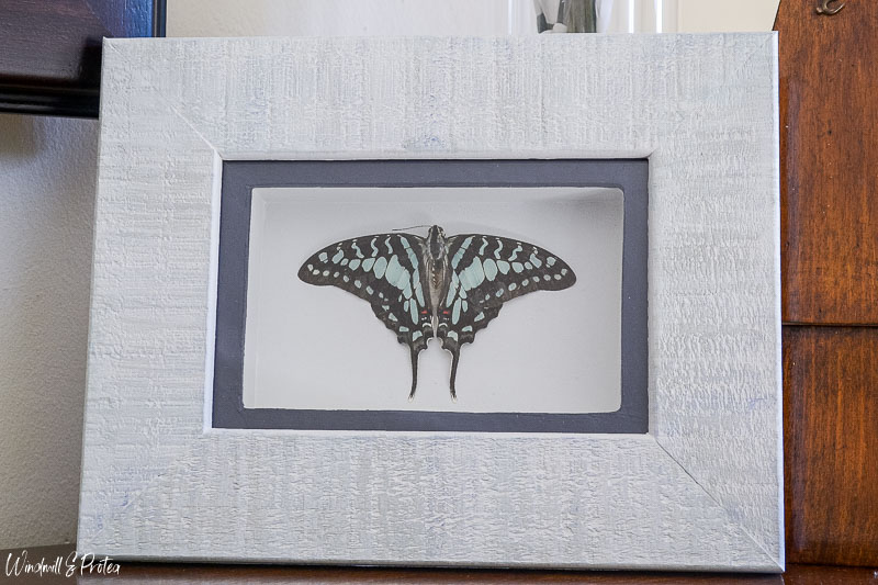 DIY Butterfly Shadow Box | www.windmillprotea.com