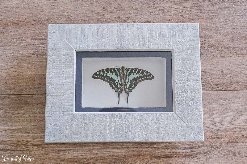 Butterfly Shadow Box DIY | www.windmillprotea.com