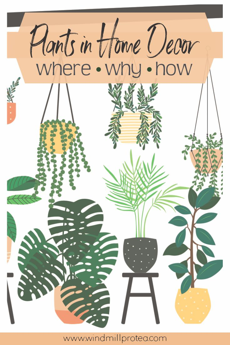 Plants in Home Decor | www.windmillprotea.com