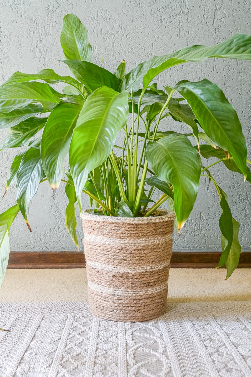 DIY Rope Basket - Plant | www.windmillprotea.com