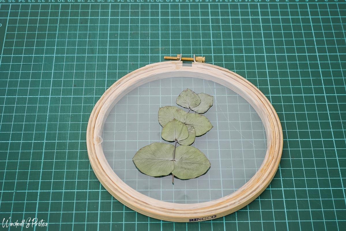 Place Eucalyptus Leaf | www.windmillprotea.com